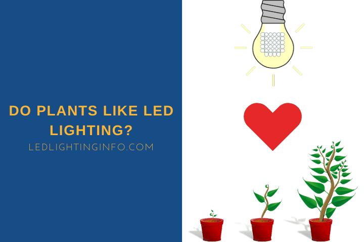 Do Plants Like LED Lighting