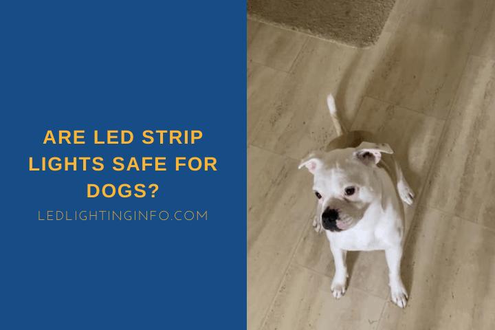 Are LED Strip Lights Safe For Dogs